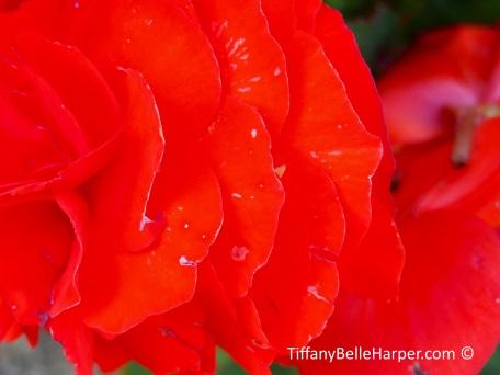Tiffany Belle Harper Photography